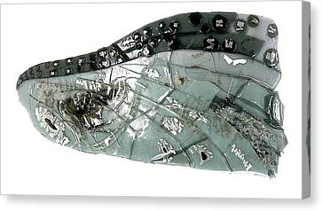 Mayfly Wing  Canvas Print by Sarah King