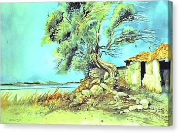 Mayorcan Tree Canvas Print