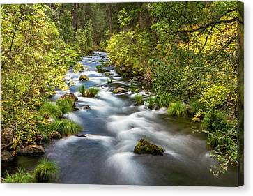 Canvas Print - Mcarthur-burney Falls Creek by Bill Gallagher