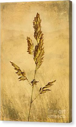 Meadow Grass Canvas Print by John Edwards