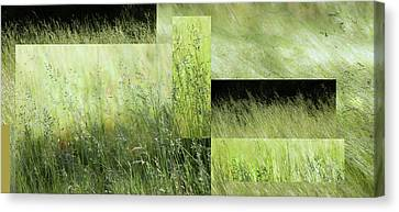 Meadow -  Canvas Print
