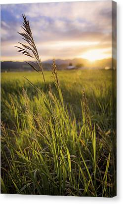 Grass Canvas Print - Meadow Light by Chad Dutson