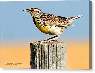 Canvas Print featuring the photograph Meadowlark 2 by Don Durfee