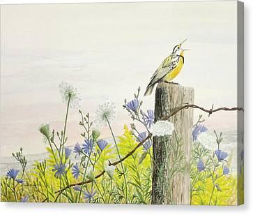 Meadowlark Canvas Print by Steve Mountz