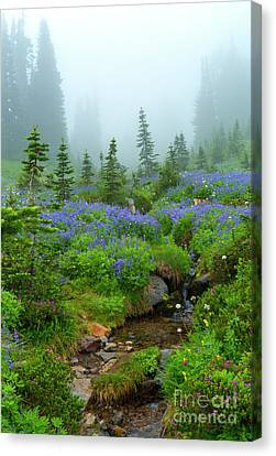 Meadows In The Mist Canvas Print by Mike Dawson