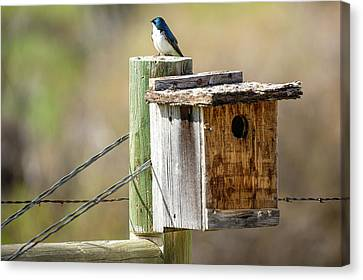 Meagher County Swallow Canvas Print by Todd Klassy