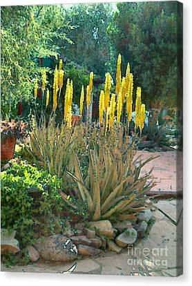 Medicine Aloes In Bloom Canvas Print by Elinor Mavor