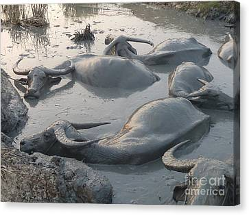 Canvas Print featuring the photograph Medium Shot Of A Group Of Water Buffalos Wallowing In A Mud Hole by Jason Rosette