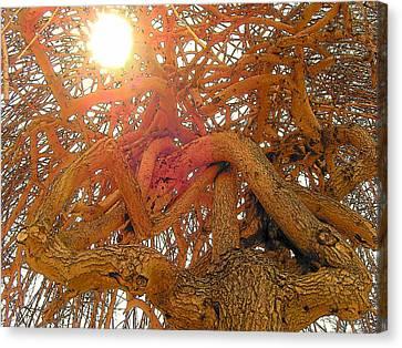 Medusa Arboraceous Canvas Print by Robert  Collier