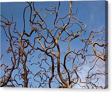 Medusa Limbs Reaching For The Sky Canvas Print