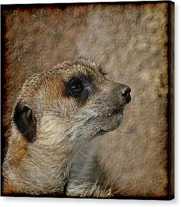 Meerkat 3 Canvas Print by Ernie Echols