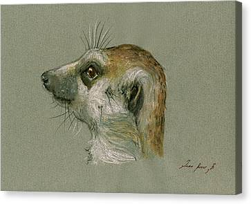 Meerkat Or Suricate Painting Canvas Print