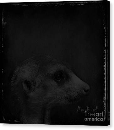 Meerkats In Black Canvas Print by iMia dEsigN