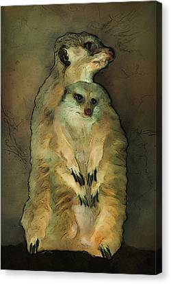 Meerkats Canvas Print by Jack Zulli