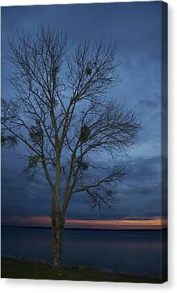 Meet Me Under The  Mistletoe Canvas Print by Skip Willits
