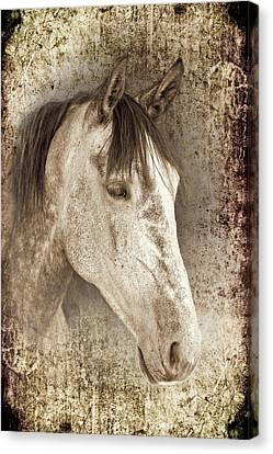 Dressage Canvas Print - Meet The Andalucian by Meirion Matthias