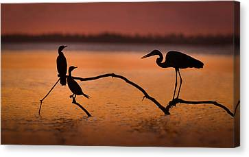Meeting At Sunset Canvas Print by Jean-luc Besson