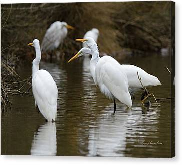 Canvas Print featuring the photograph Meeting Of The Egrets by George Randy Bass