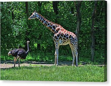 Canvas Print - Meeting Of The Long Necks by Allen Beatty
