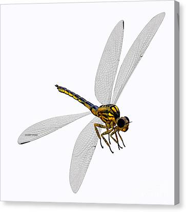 Meganeura Canvas Print - Meganeura Dragonfly Body by Corey Ford