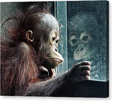 Melancholy Baby Canvas Print by Wade Aiken