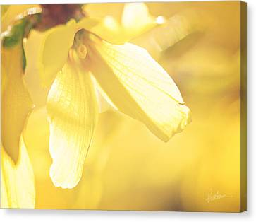 Canvas Print featuring the photograph Mellow Yellow by Kharisma Sommers
