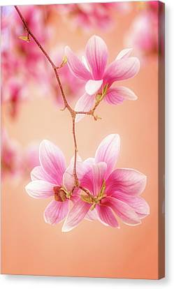 Melodies Of Spring  Canvas Print
