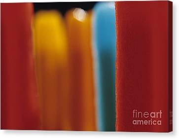Melting Popsicles Canvas Print by Jim Corwin