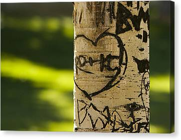 Memories In The Aspen Tree Canvas Print by James BO  Insogna