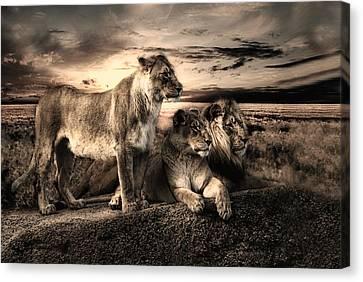 Lioness Canvas Print - Menage A Trois by Joachim G Pinkawa