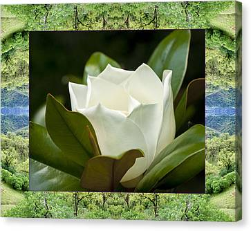 Canvas Print featuring the photograph Mendocino Magnolia by Bell And Todd