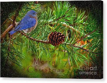 Merry Christmas Card With Bluebird Canvas Print