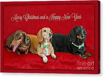 Merry Christmas Dachshunds Canvas Print