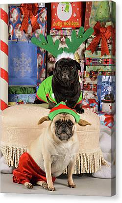 Merry Pug-mas Canvas Print