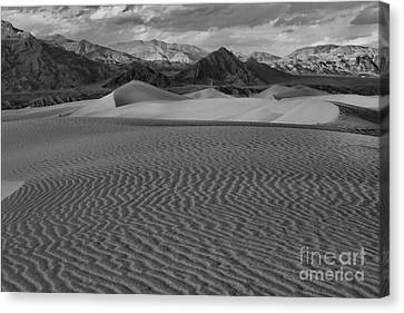 Mesquite Dunes Black And White Canvas Print by Adam Jewell