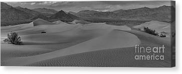 Mesquite Sand Dunes Black And White Panorama Canvas Print by Adam Jewell