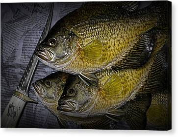 Mess Of Fish To Clean Canvas Print by Randall Nyhof