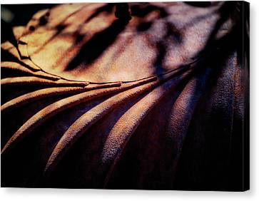 Metal Like Liquid Canvas Print by Terry Davis