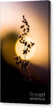Orb Canvas Print - Mexican Desert Sunset by Jorgo Photography - Wall Art Gallery