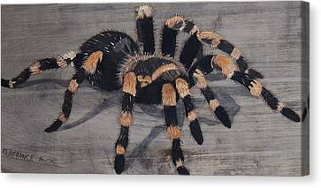 Mexican Red Knee Tarantula Canvas Print by Debbie LaFrance