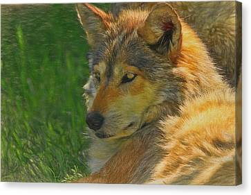 Mexican Wolf Canvas Print by Dan Sproul