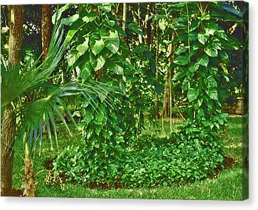 Canvas Print featuring the photograph Mexico Greenery by Tammy Sutherland
