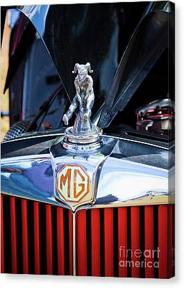 Canvas Print featuring the photograph Mg Fool by Chris Dutton