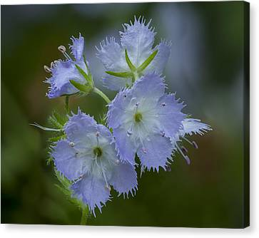 Miami Mist Bloom Canvas Print