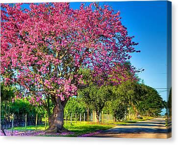 Miami's Fall Colors Canvas Print