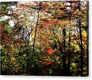 Michigan Fall Colors 11 Canvas Print by Scott Hovind