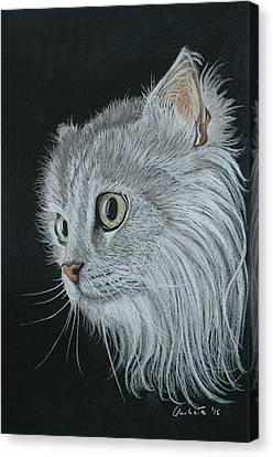 Micio Bianco Canvas Print by Umberta Ruffini