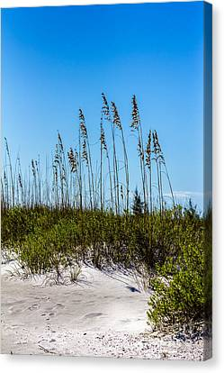 Mid Day Dunes Canvas Print by Marvin Spates
