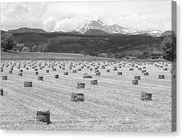 Mid June Colorado Hay  And The Twin Peaks Longs And Meeker Bw Canvas Print by James BO  Insogna