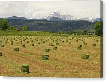 Mid June Colorado Hay  And The Twin Peaks Longs And Meeker Canvas Print by James BO  Insogna